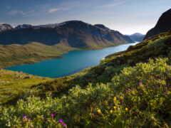 norwegian, коллекция, картинка