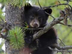 медведь, дерево, animal