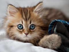 мире, котенок