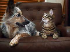 кот, собака, animal