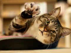 кот, коты, funny