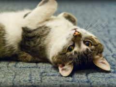 кот, upside, down