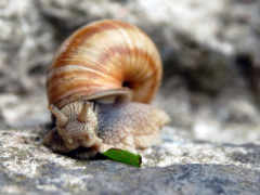 snail, шпалери, компьютер