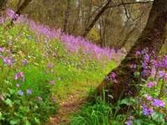 цветы, весна, purple