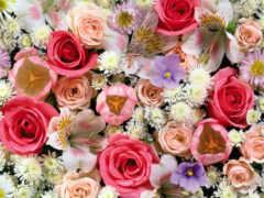 цветы, birth, dnee