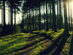лес, funart, дерево