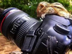 animal, фотоаппарат, можно