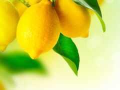 lemon, весна, vsetop