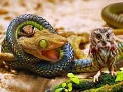 snake, ящер, сова