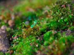 макро, мох, растения