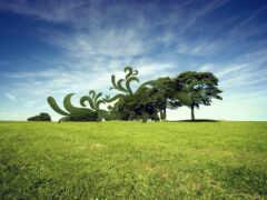 природа, дерево, фон