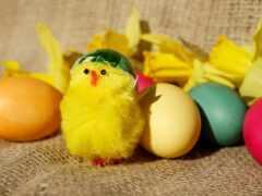 восток, яйцо, курица