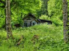 лес, house, oir