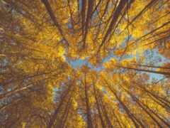 дерево, день, сентябрь