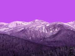 vivo, stock, purple