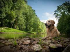 собака, природа, лежит