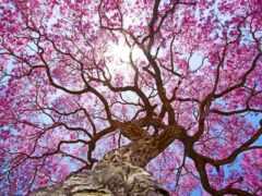дерево, branch, color