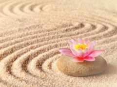lotus, cvety, песок