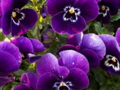 cvety, красивые, широкоформатные