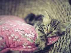 spat, котенок, кошка