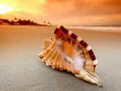 plage, море, coquillage