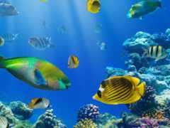 рыбки,  коралловый риф
