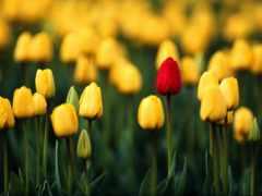 flores, bellas, para