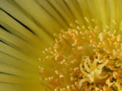 cvety, макро, высокого