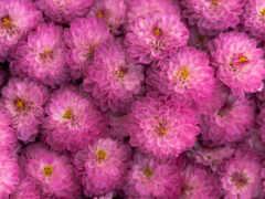 команда, color, kwiaty