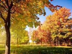 осень, funart