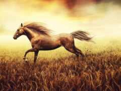 лошадь, лошади, поле