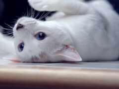 кот, white, верить