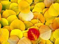 текстура, yellow, природа