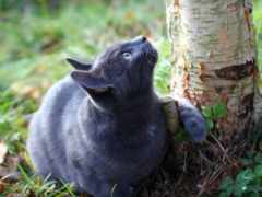 кот, дерево, love
