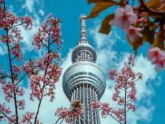 лепестки, япония, растение