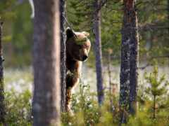 лес, fore, peep