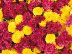 цветы, осень, funart