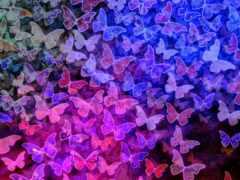 бабочка, розовый, purple