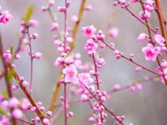 cvety, цветущие, весна