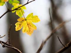 листики, осень