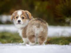 щенок, снегу, коллекция