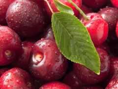 cherry, water, плод