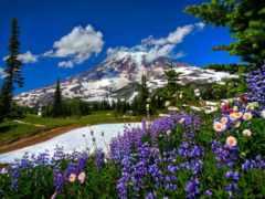 горы, цветы, луга