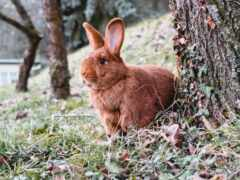 кролик, animal, bunny