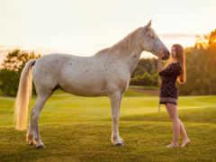 лошадь, sorgusuna, kayıtsız