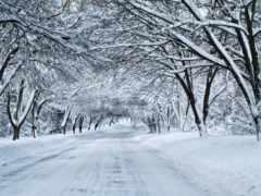 winter, дорога, природа Фон № 148146 разрешение 1920x1200