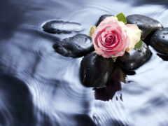 cvety, water, роза