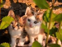 котята, милые, кошки
