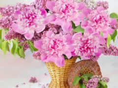 цветы, пион, корзина