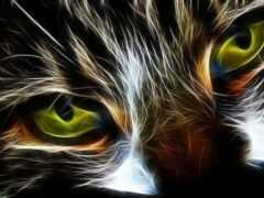 abstract, кот, lobo